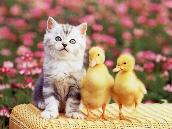 chicks Wallpapers